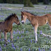 Mustang Foals Art Print