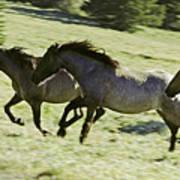 Mustang Mares Art Print
