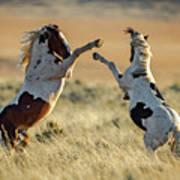 Mustang Rivalry Art Print