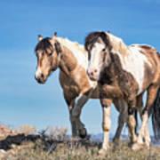 Mustang Twin Stallions Art Print