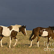 Mustangs In Nevada Art Print