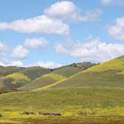 Mustard On Nipomo Hills Art Print