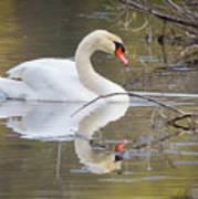 Mute Swan Glide II Art Print