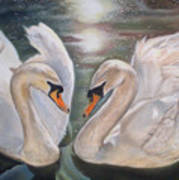 Mute Swans - River Severn Art Print