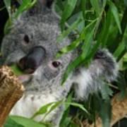 My Eucalyptus Art Print