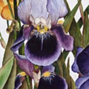 My Iris Garden Art Print