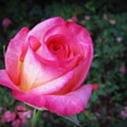 My Special Rose Art Print