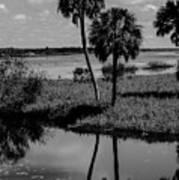 Myakka River Reflections Art Print