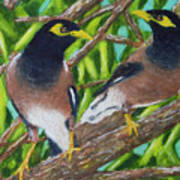 Mynah Birds #474 Art Print