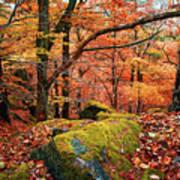 Mystery Of Autumn Art Print