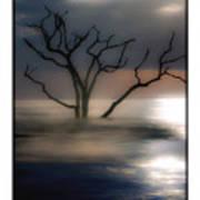 Mystery Tree Art Print