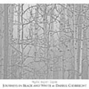Mystic Aspen Copse Art Print