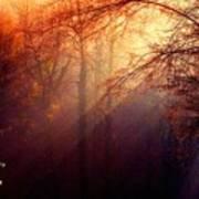 Mystic Forest At Dawn L A Art Print