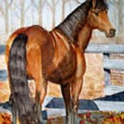 Mystic In Her Paddock Art Print