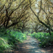 Mystical Angel Oaks  Art Print