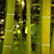 Mystical Bamboo Art Print