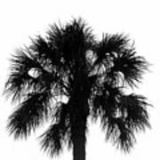 Naked Palm Art Print