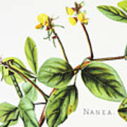 Nanea Flower Art Art Print