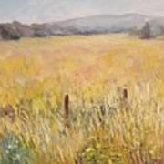 Napa Fields Art Print