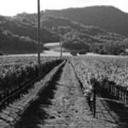 Napa Valley Vineyard .  Black And White . 7d9020 Art Print by Wingsdomain Art and Photography