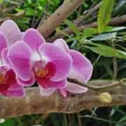 Naples Orchid 1 Art Print