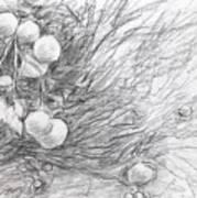 Naranjas En Nocaima Art Print