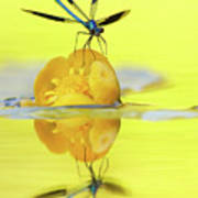 Narcissus - Damselfly Reflected In The River Art Print
