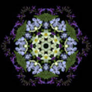 Narcissus Group 2 Art Print