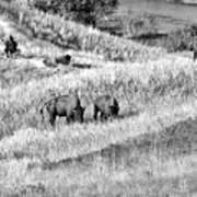 National Bison Range Wildlife Refuge Mt Usa Art Print