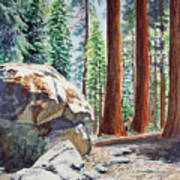 National Park Sequoia Art Print