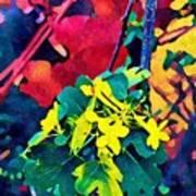 Native Plants Become Art.  Art Print