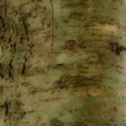 Native Tree Art Print