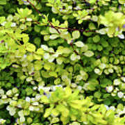 Natural Background With Small Yellow Green Leaves. Art Print