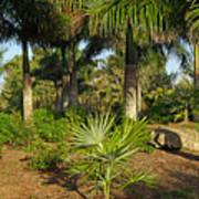 Natural Beauty Of Florida Art Print