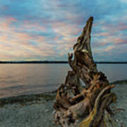 Natural Driftwood At Birch Bay State Park Art Print