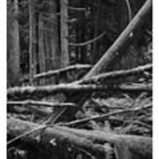 Natural Forest Art Print