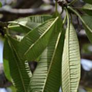 Natural Leaf Art Print