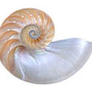 Natural Nautilus Seashell On White Art Print
