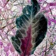 Nature Abstract Of Leaf And Grass Art Print
