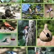 Nature Collage Art Print