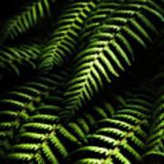 Nature In Minimalism Art Print