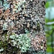 Nature Painted Tree Bark Art Print