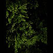 Nature Plants Art Print