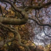 Nature Tangle Art Print