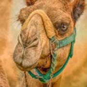 Nature Wear Camel Art Print
