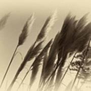 Natures Brushes Art Print