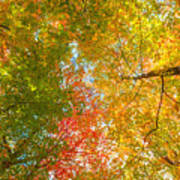 Natures Canopy Of Color Art Print