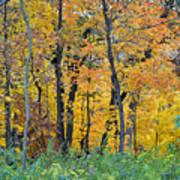 Nature's Colors Art Print