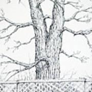 Nature's Lines Art Print