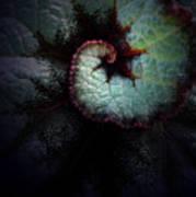 Nature's Rex Begonia Art Print